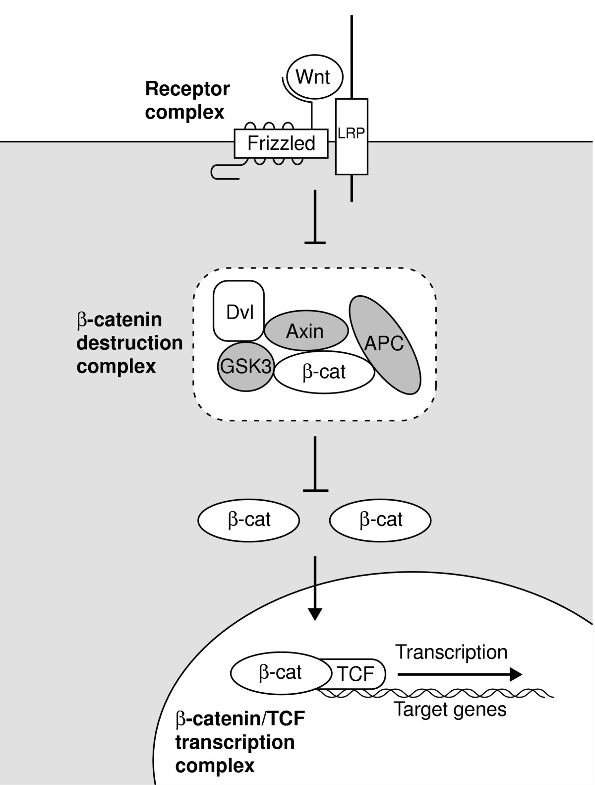 http://static-content.springer.com/image/art%3A10.1186%2Fgb-2005-6-9-231/MediaObjects/13059_2005_Article_975_Fig1_HTML.jpg