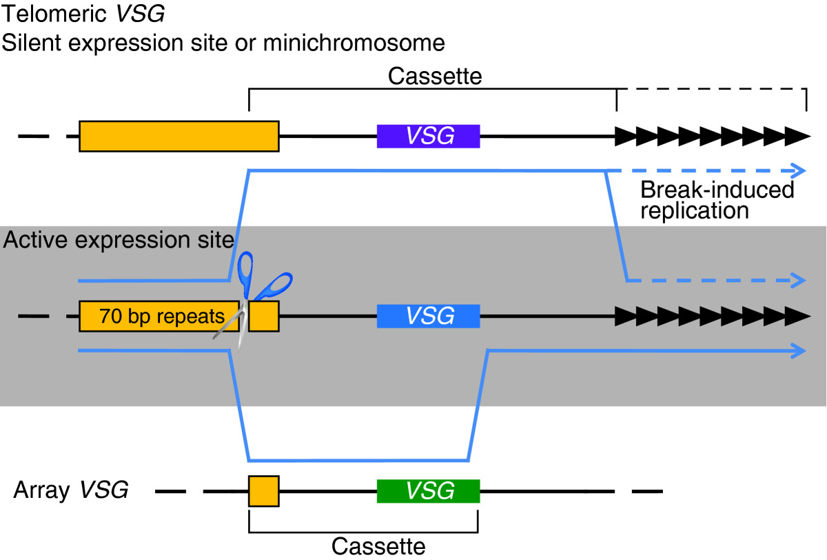 http://static-content.springer.com/image/art%3A10.1186%2Fgb-2009-10-6-223/MediaObjects/13059_2009_Article_2105_Fig1_HTML.jpg