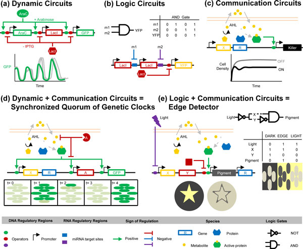 http://static-content.springer.com/image/art%3A10.1186%2Fgb-2012-13-2-240/MediaObjects/13059_2012_2728_Fig1_HTML.jpg