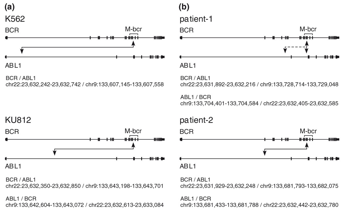 http://static-content.springer.com/image/art%3A10.1186%2Fgm191/MediaObjects/13073_2010_Article_191_Fig2_HTML.jpg