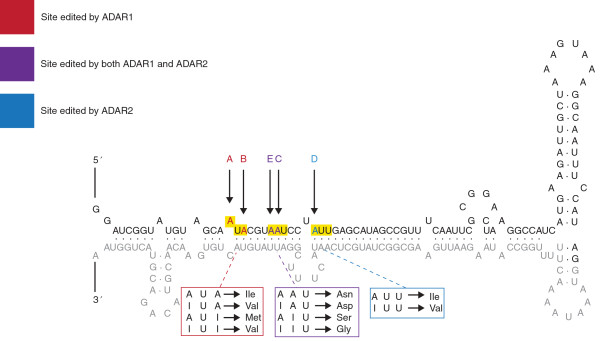 http://static-content.springer.com/image/art%3A10.1186%2Fgm508/MediaObjects/13073_2013_496_Fig3_HTML.jpg