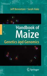 Handbook of Maize