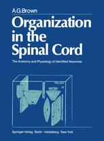 Organization in the Spinal Cord