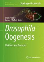 Drosophila Oogenesis