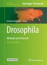 Drosophila