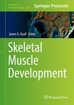 Skeletal Muscle Development