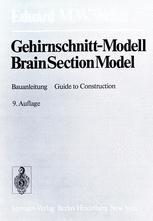 Gehirnschnitt-Modell / Brain Section Model