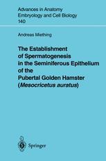 The Establishment of Spermatogenesis in the Seminiferous Epithelium of the Pubertal Golden Hamster (Mesocricetus auratus)