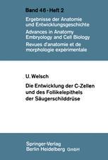 Die Entwicklung der C-Zellen und des Follikelepithels der Säugerschilddrüse