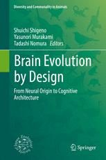 Brain Evolution by Design