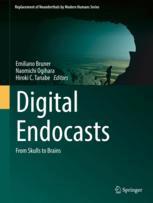 Digital Endocasts