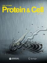 Protein & Cell