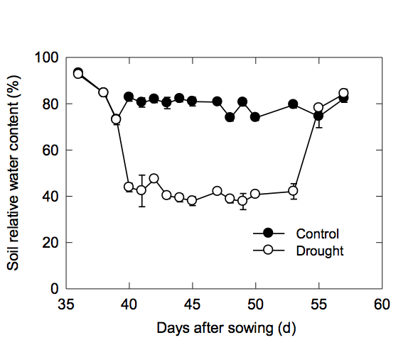 pre anthesis and post anthesis Determining critical pre‐ and post‐anthesis periods and physiological processes in lycopersicon esculentum mill exposed to moderately elevated temperatures.