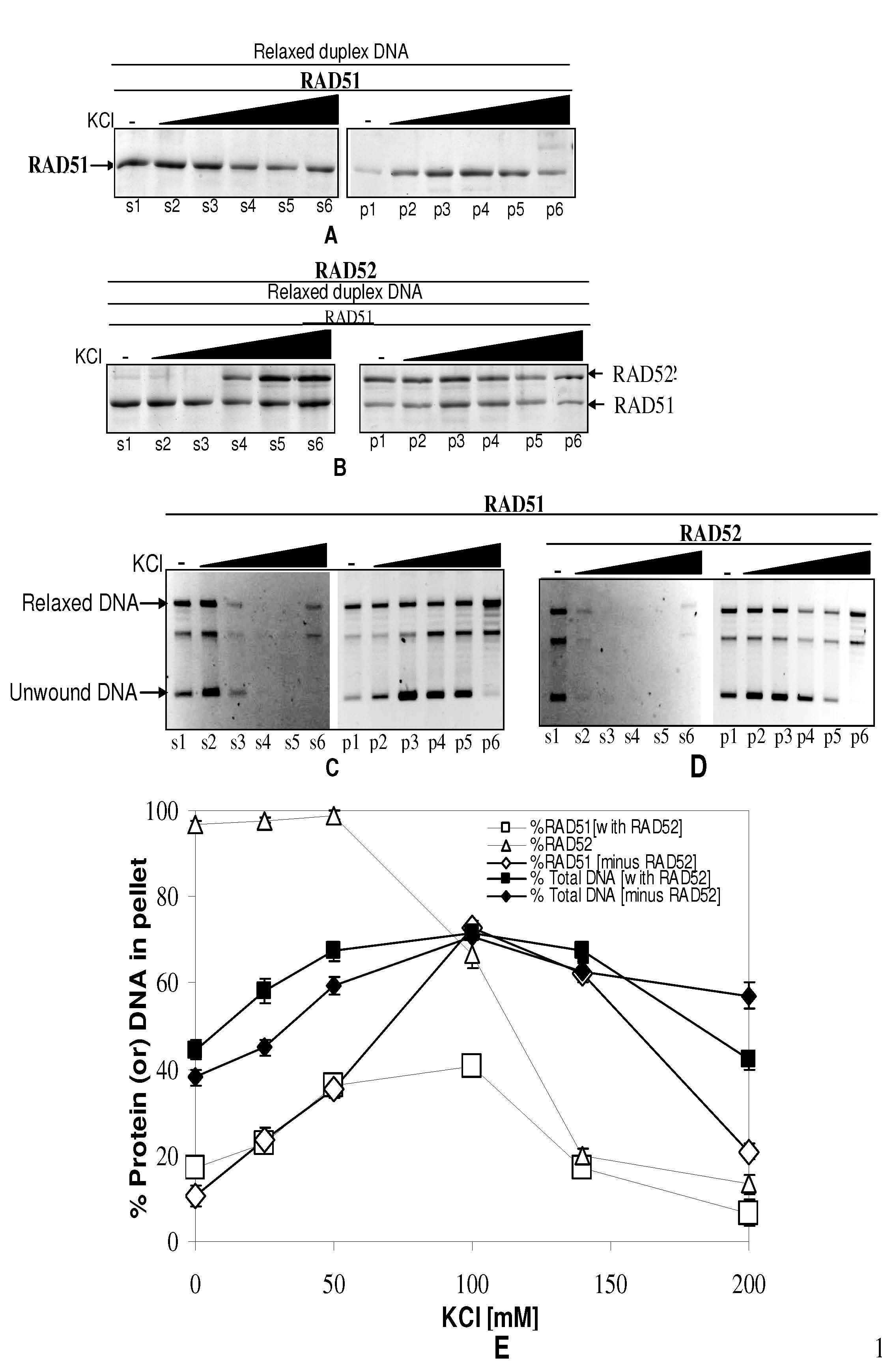 Human Rad51 mediated DNA unwinding is facilitated by conditions ...