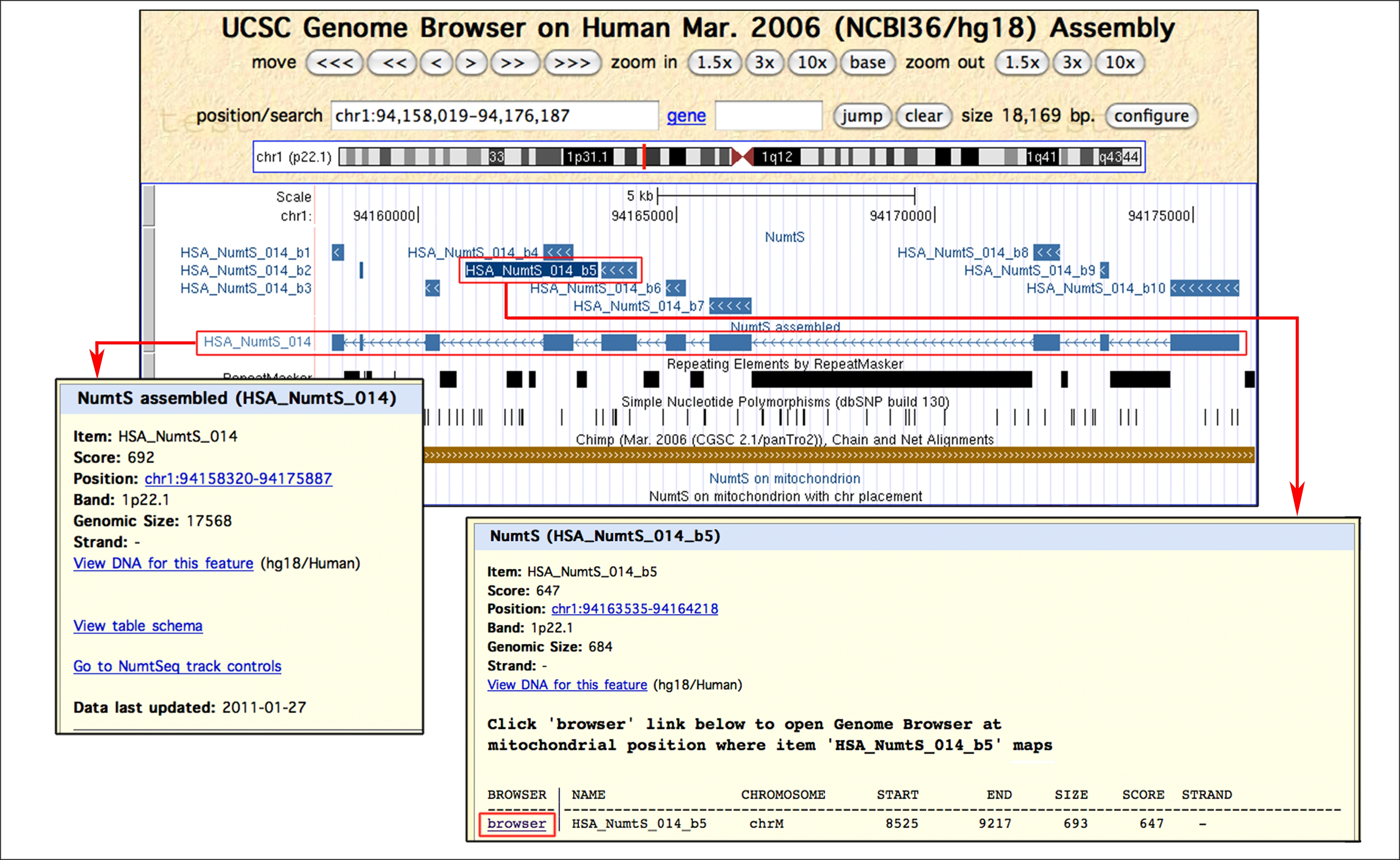 The reference human nuclear mitochondrial sequences compilation ...
