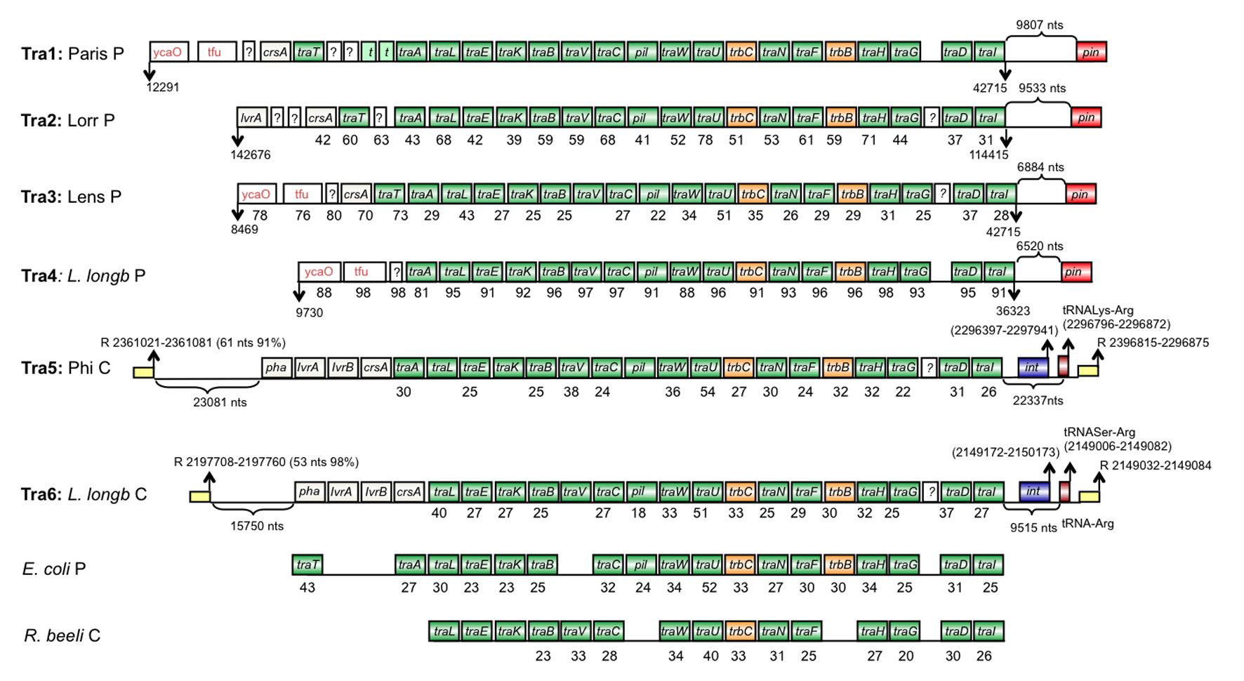 Extensive recombination events and horizontal gene transfer shaped 1286420113676moesm11esmg nvjuhfo Image collections