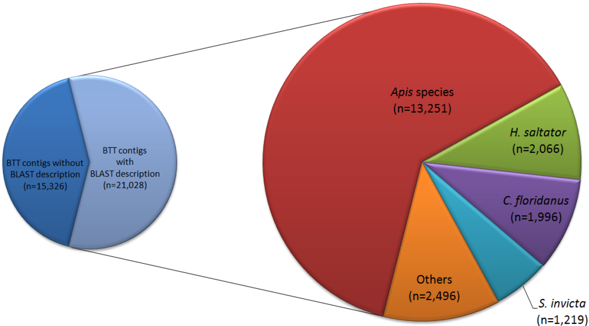 Polyphenism in social insects insights from a transcriptome wide 1286420113845moesm8esmg nvjuhfo Image collections
