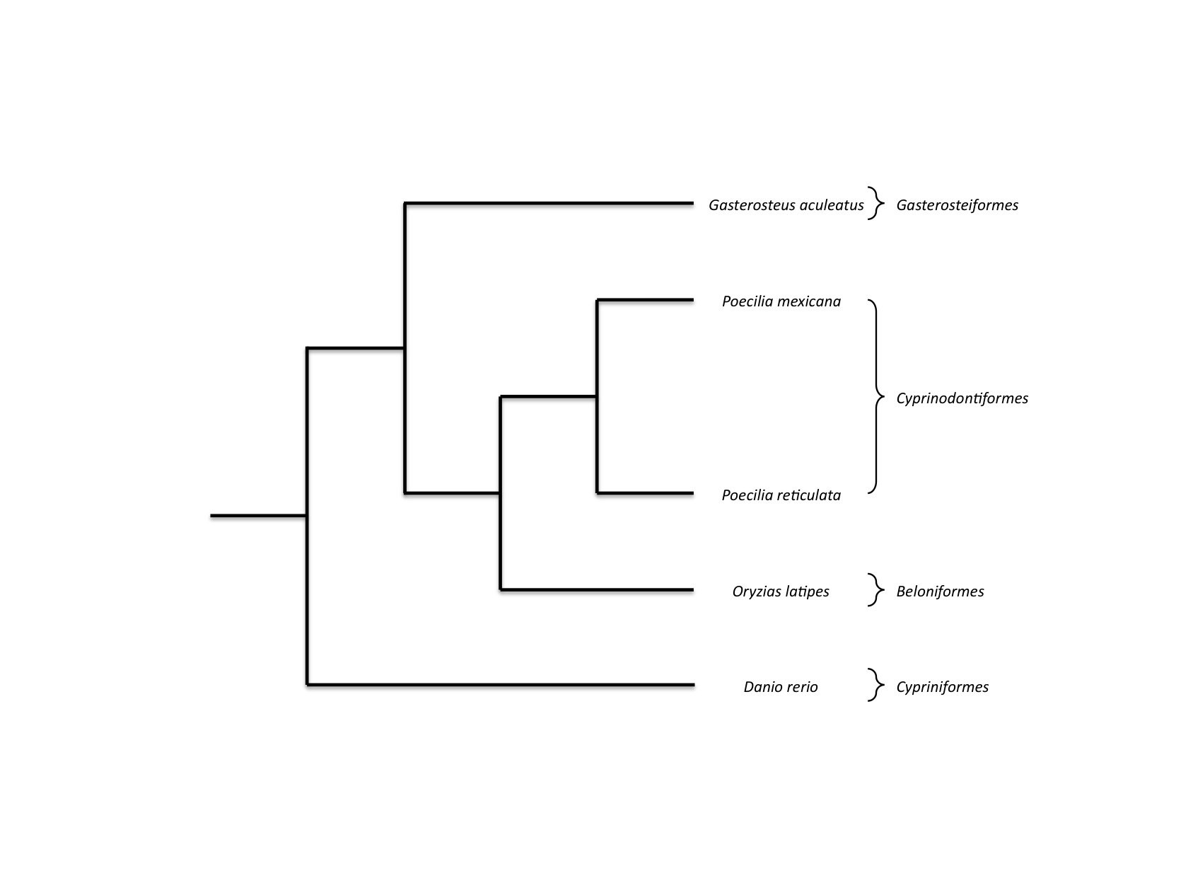 Genomic resources for a model in adaptation and speciation 1286420124773moesm3esmeg additional file 3 figure s2 phylogenetic relationships betweenspecies used in the comparative transcriptome analysis after nvjuhfo Images