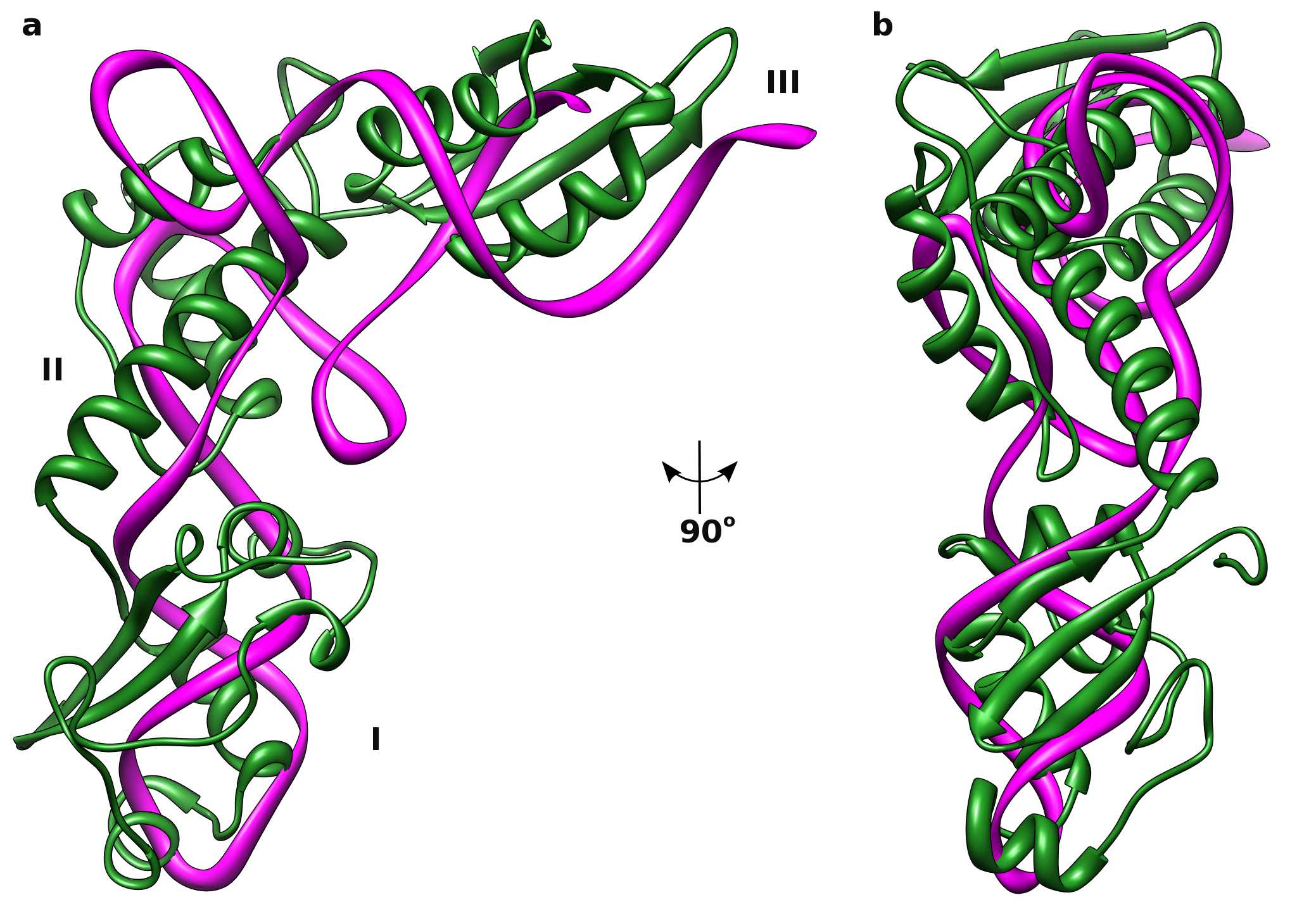 Conformational flexibility and molecular interactions of an ...