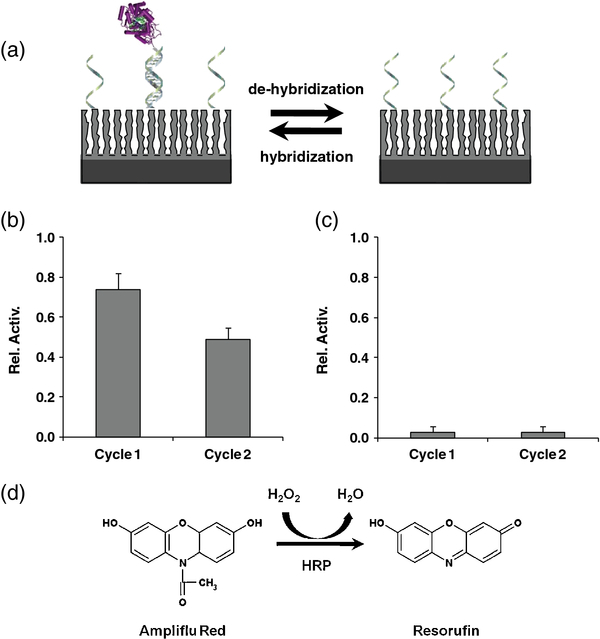 enzyme furnace dna directed immobilization of horseradish peroxidase onto porous