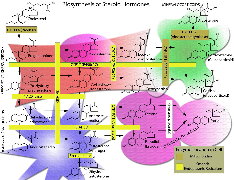 steroidogenic hormones