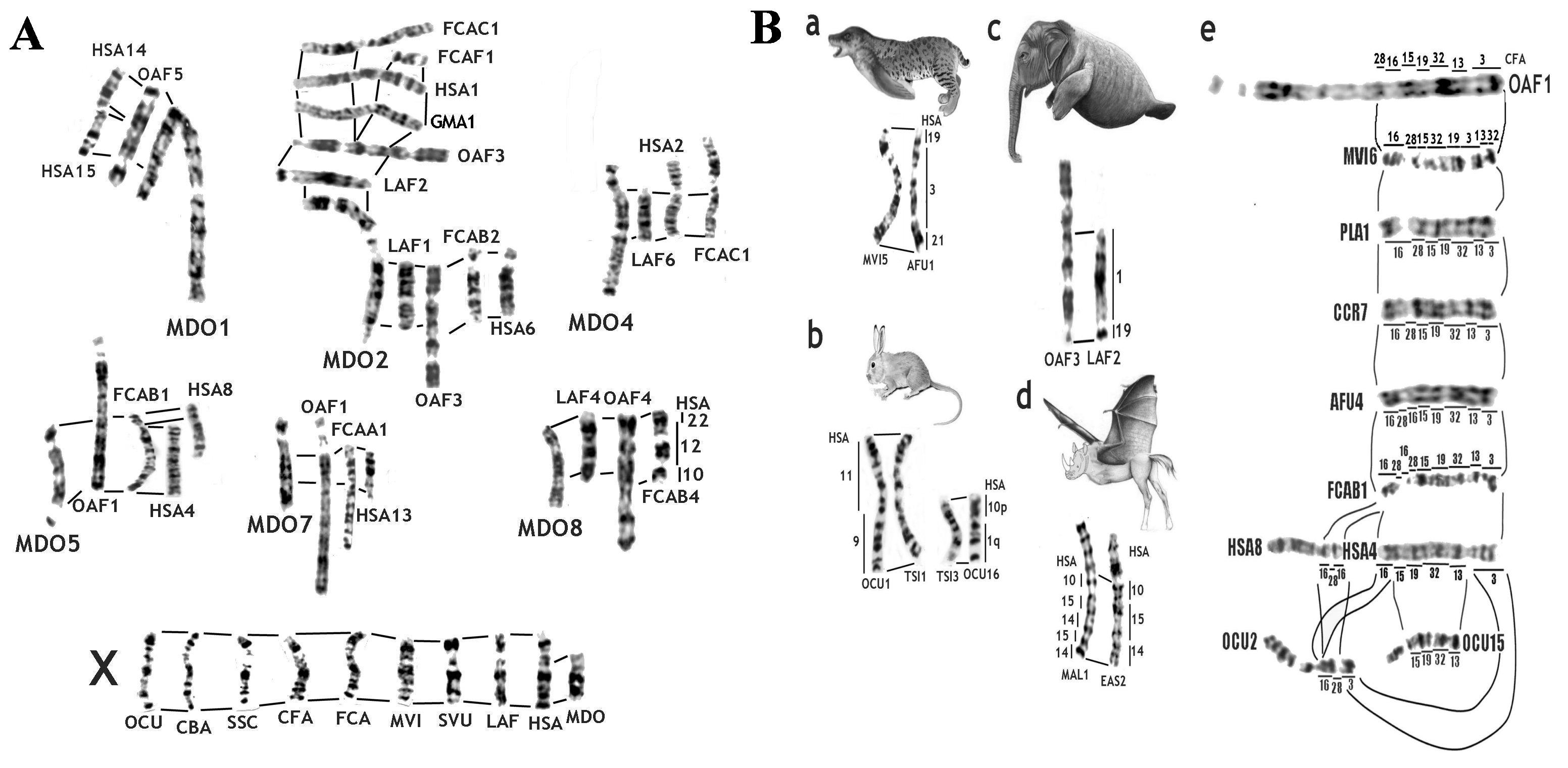 worksheet Karyotype Worksheet dog karyotype analysis worksheet the genome diversity and evolution of mammals