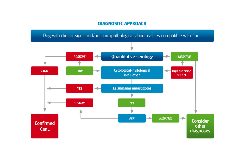 Leishvet guidelines for the practical management of canine 130712011341moesm13esmeg geenschuldenfo Choice Image