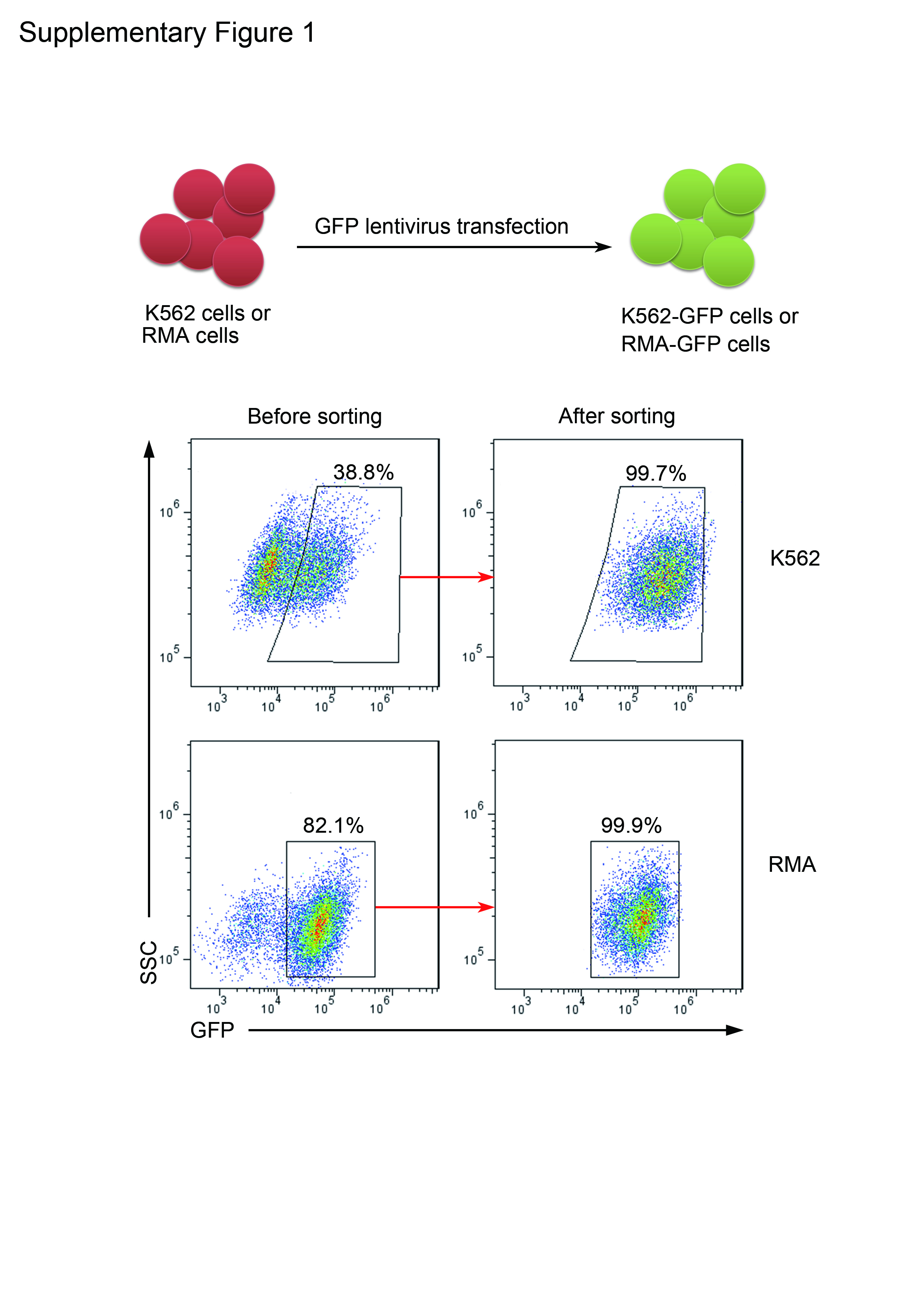 Quantitative evaluation of the immunodeficiency of a mouse strain a flow chart of establishing k562 gfp and rma gfp cells that that constitutively expressed green fluorescent protein gfp geenschuldenfo Image collections