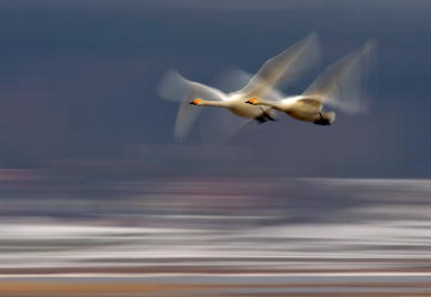 https://static-content.springer.com/image/art%3A10.1007%2Fs10071-011-0433-2/MediaObjects/10071_2011_433_Fig1_HTML.jpg