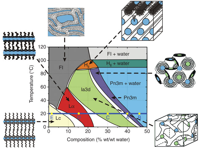Temperature-composition phase diagram of the monoolein/water system determined under 'conditions of use' in the heating and cooling directions from 20 °C.