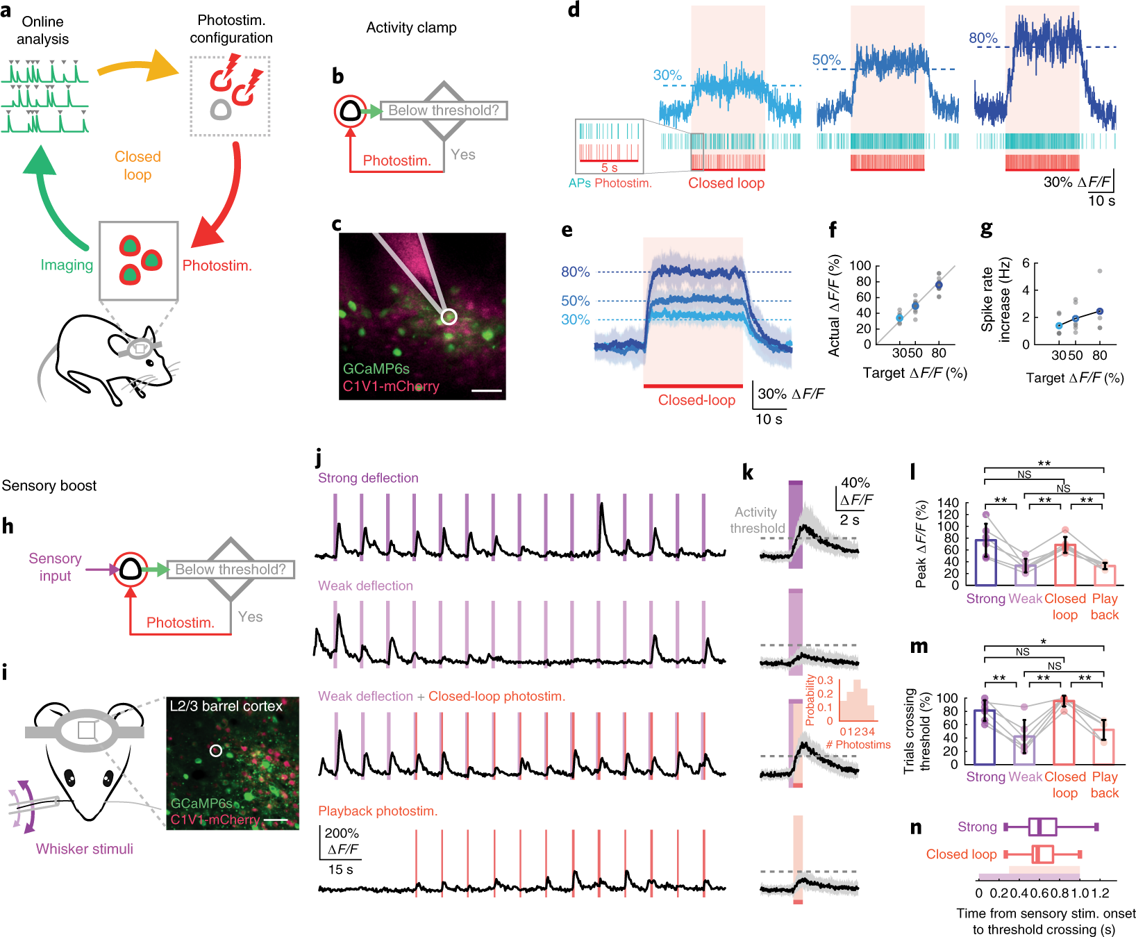 Targeted closed-loop all-optical readout and control in vivo.