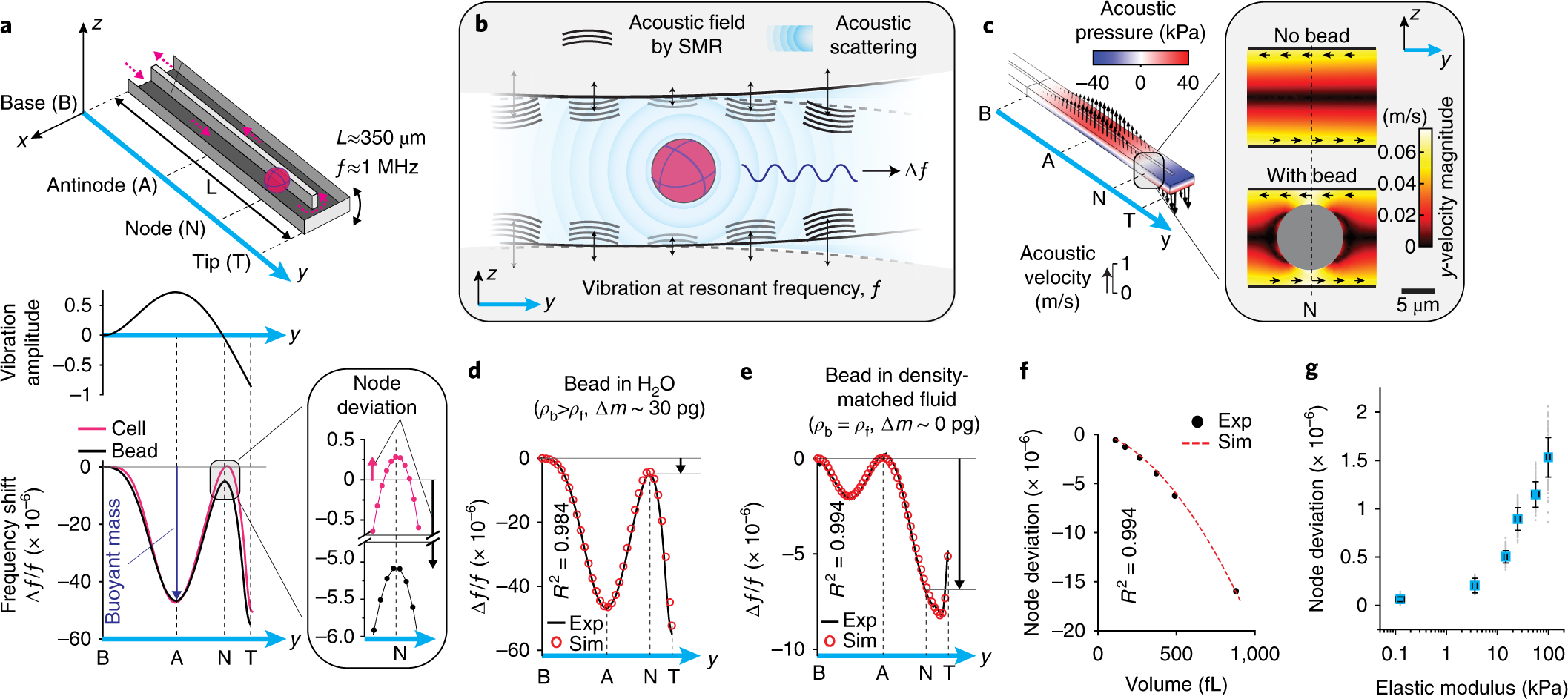 Acoustic scattering causes a resonant frequency shift at the node of an SMR.