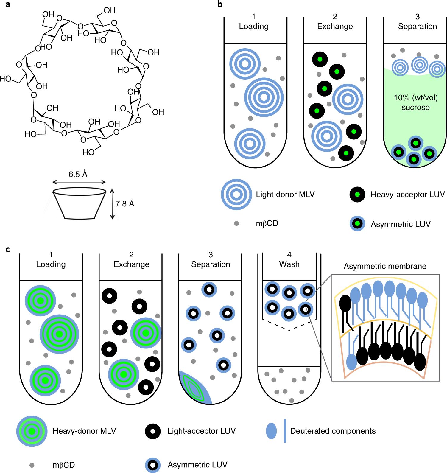 Illustration of different aLUV preparation protocols.