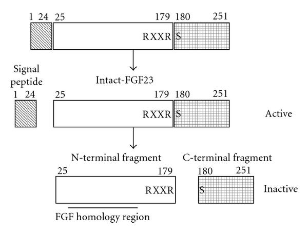 https://static-content.springer.com/image/art%3A10.1155%2F2009%2F496514/MediaObjects/13633_2009_Article_386_Fig1_HTML.jpg