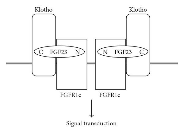 https://static-content.springer.com/image/art%3A10.1155%2F2009%2F496514/MediaObjects/13633_2009_Article_386_Fig3_HTML.jpg