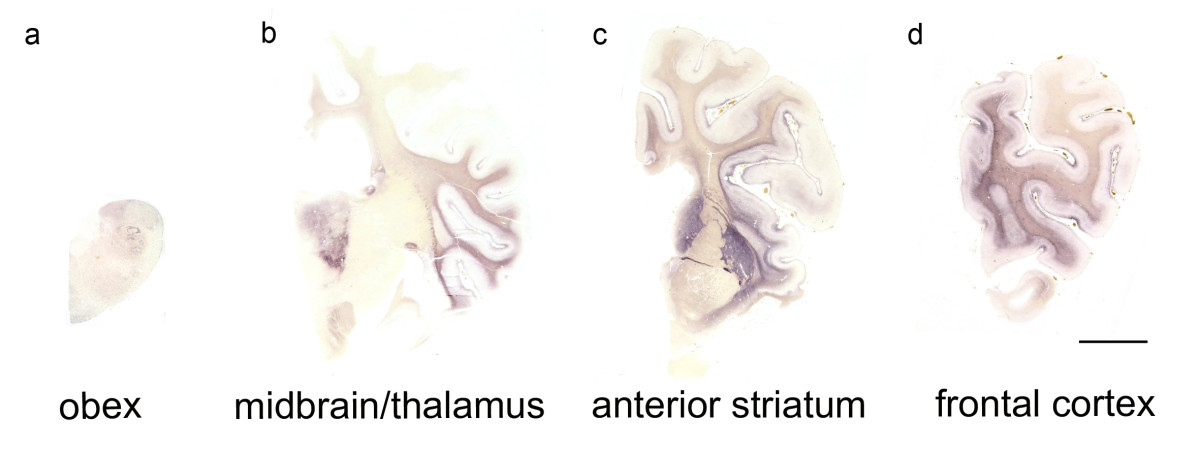https://static-content.springer.com/image/art%3A10.1186%2F1297-9716-42-32/MediaObjects/13567_2010_Article_32_Fig6_HTML.jpg