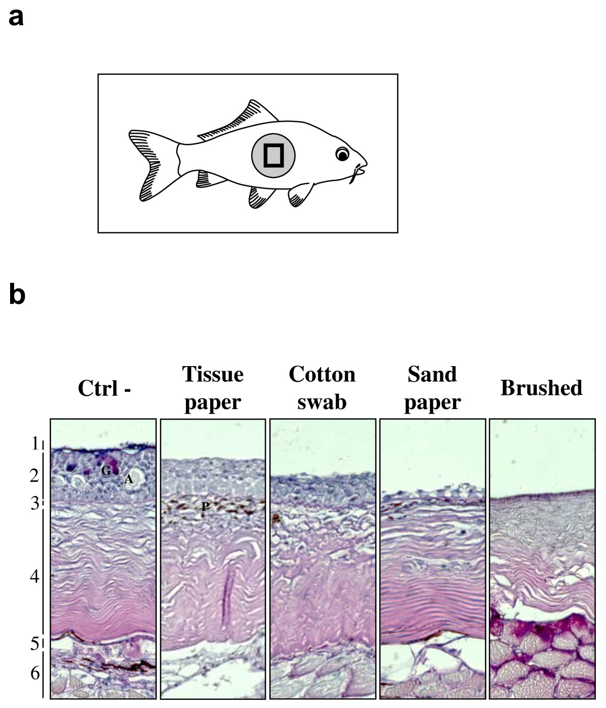 https://static-content.springer.com/image/art%3A10.1186%2F1297-9716-42-92/MediaObjects/13567_2011_Article_92_Fig1_HTML.jpg