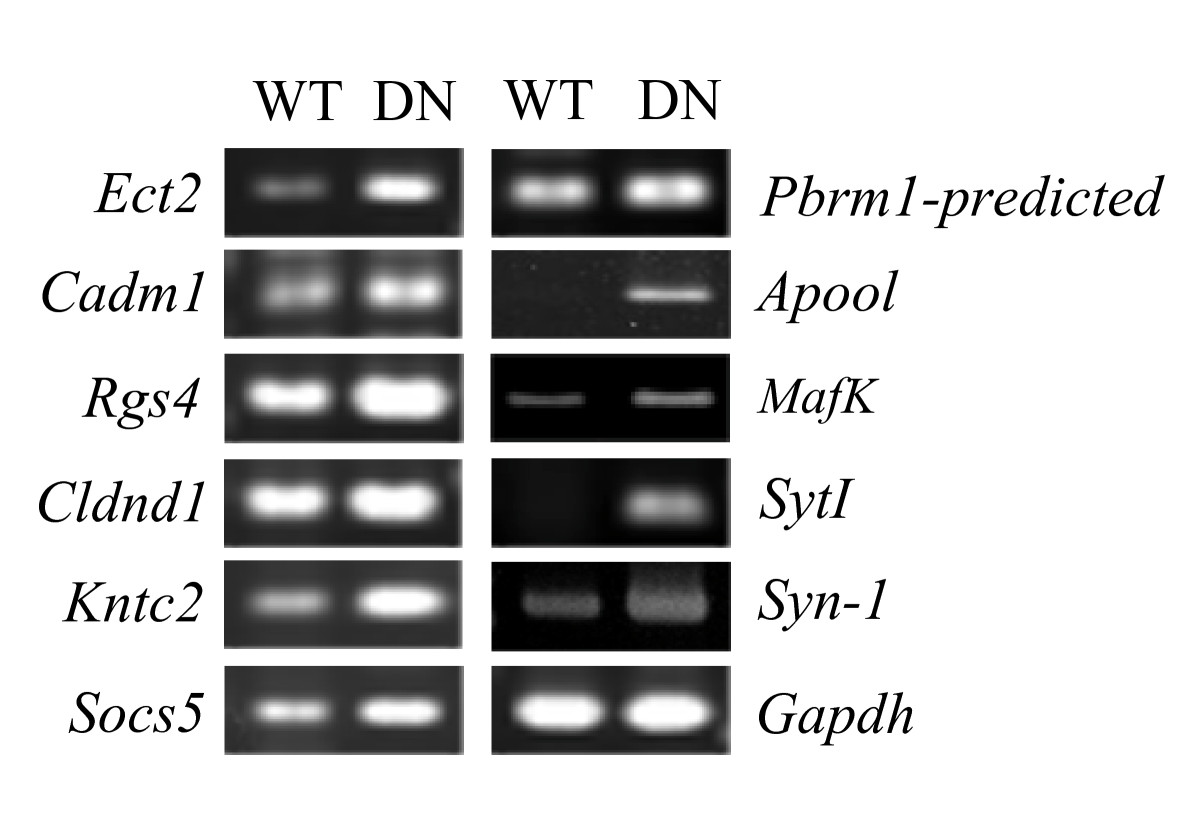 https://static-content.springer.com/image/art%3A10.1186%2F1423-0127-17-18/MediaObjects/12929_2009_Article_132_Fig1_HTML.jpg
