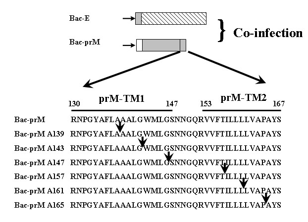 https://static-content.springer.com/image/art%3A10.1186%2F1423-0127-17-39/MediaObjects/12929_2010_Article_153_Fig2_HTML.jpg