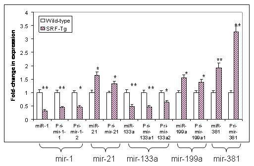 https://static-content.springer.com/image/art%3A10.1186%2F1423-0127-18-15/MediaObjects/12929_2010_Article_267_Fig6_HTML.jpg