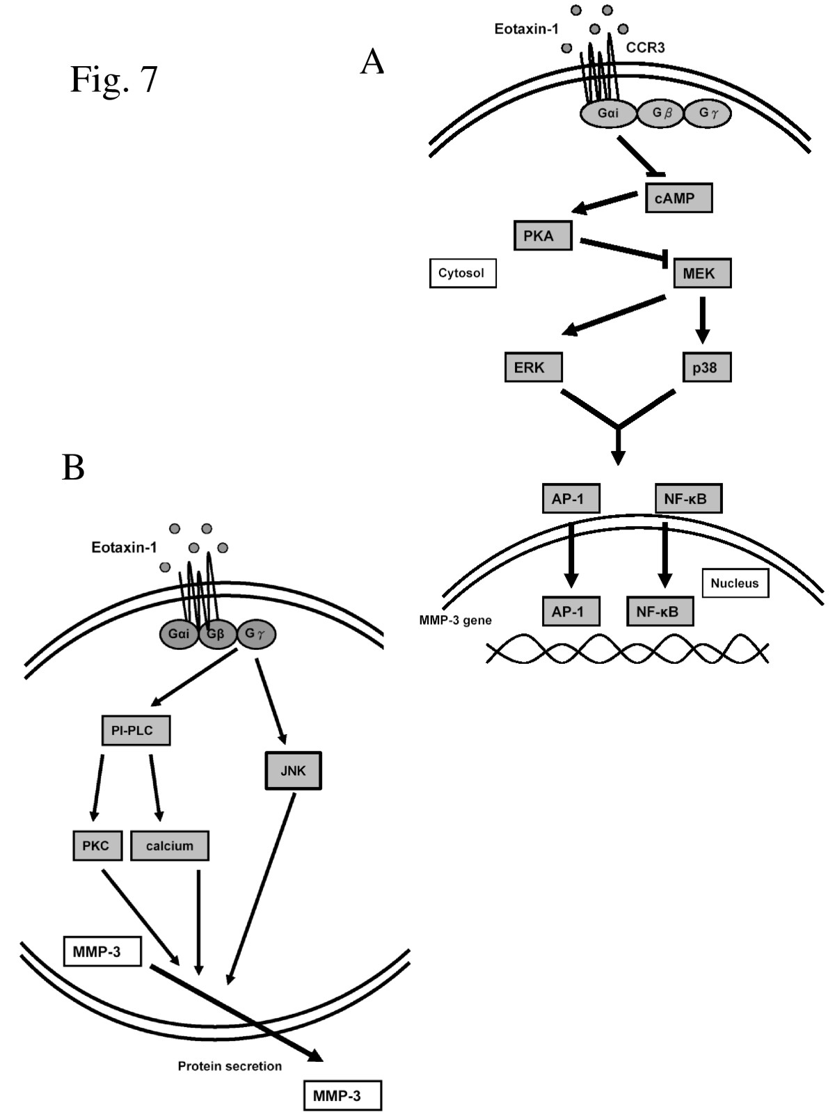 https://static-content.springer.com/image/art%3A10.1186%2F1423-0127-18-86/MediaObjects/12929_2011_Article_342_Fig7_HTML.jpg
