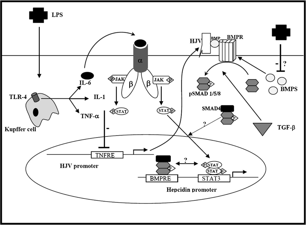 https://static-content.springer.com/image/art%3A10.1186%2F1423-0127-19-83/MediaObjects/12929_2012_Article_435_Fig7_HTML.jpg