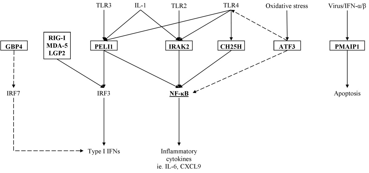 https://static-content.springer.com/image/art%3A10.1186%2F1465-9921-14-15/MediaObjects/12931_2012_Article_1314_Fig4_HTML.jpg