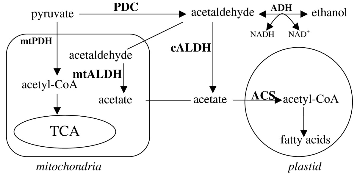 https://static-content.springer.com/image/art%3A10.1186%2F1471-2091-10-7/MediaObjects/12858_2008_Article_233_Fig1_HTML.jpg