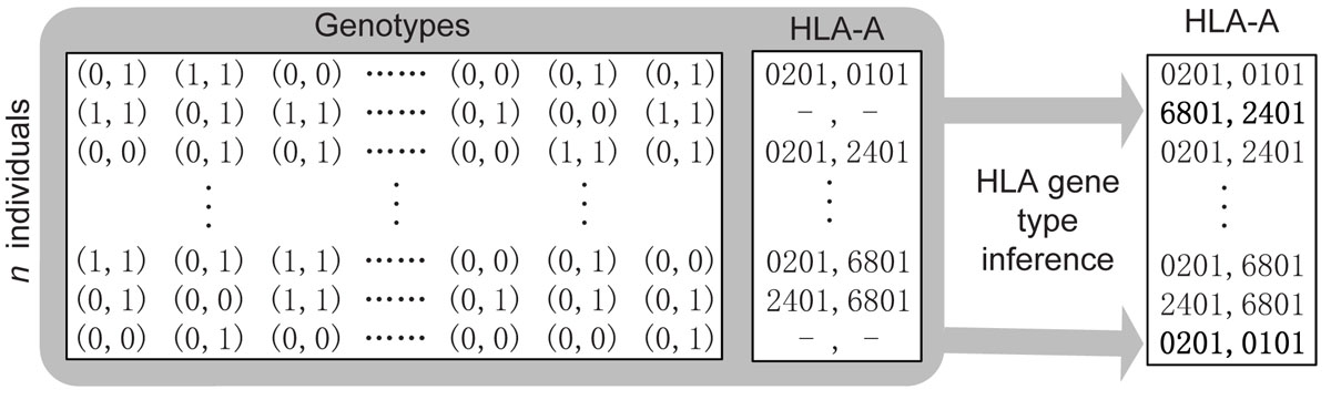 https://static-content.springer.com/image/art%3A10.1186%2F1471-2105-11-S11-S10/MediaObjects/12859_2010_Article_4298_Fig6_HTML.jpg