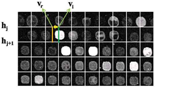 https://static-content.springer.com/image/art%3A10.1186%2F1471-2105-12-113/MediaObjects/12859_2010_Article_4507_Fig14_HTML.jpg