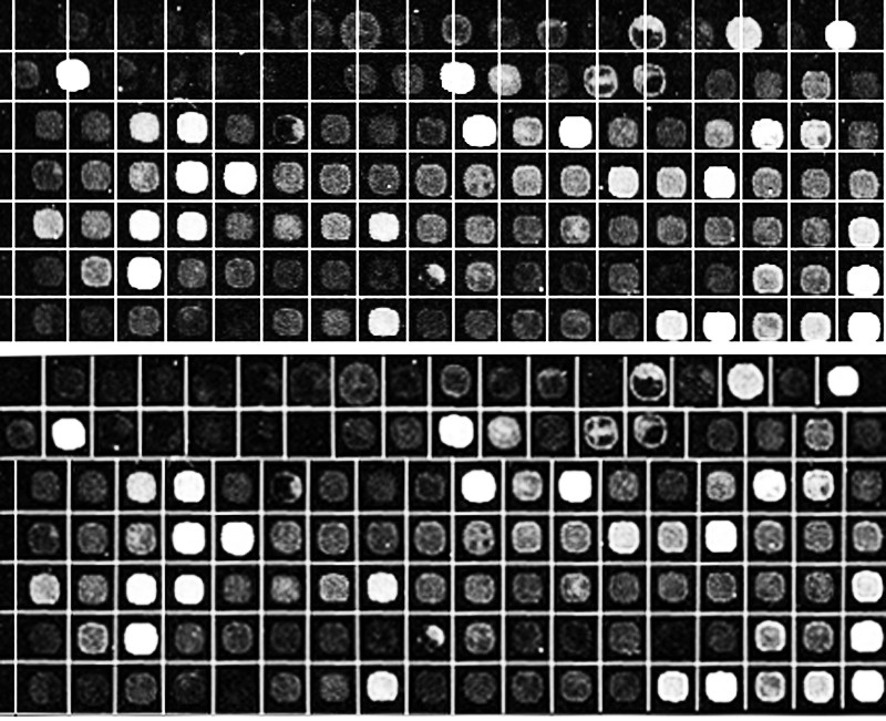 https://static-content.springer.com/image/art%3A10.1186%2F1471-2105-12-113/MediaObjects/12859_2010_Article_4507_Fig15_HTML.jpg