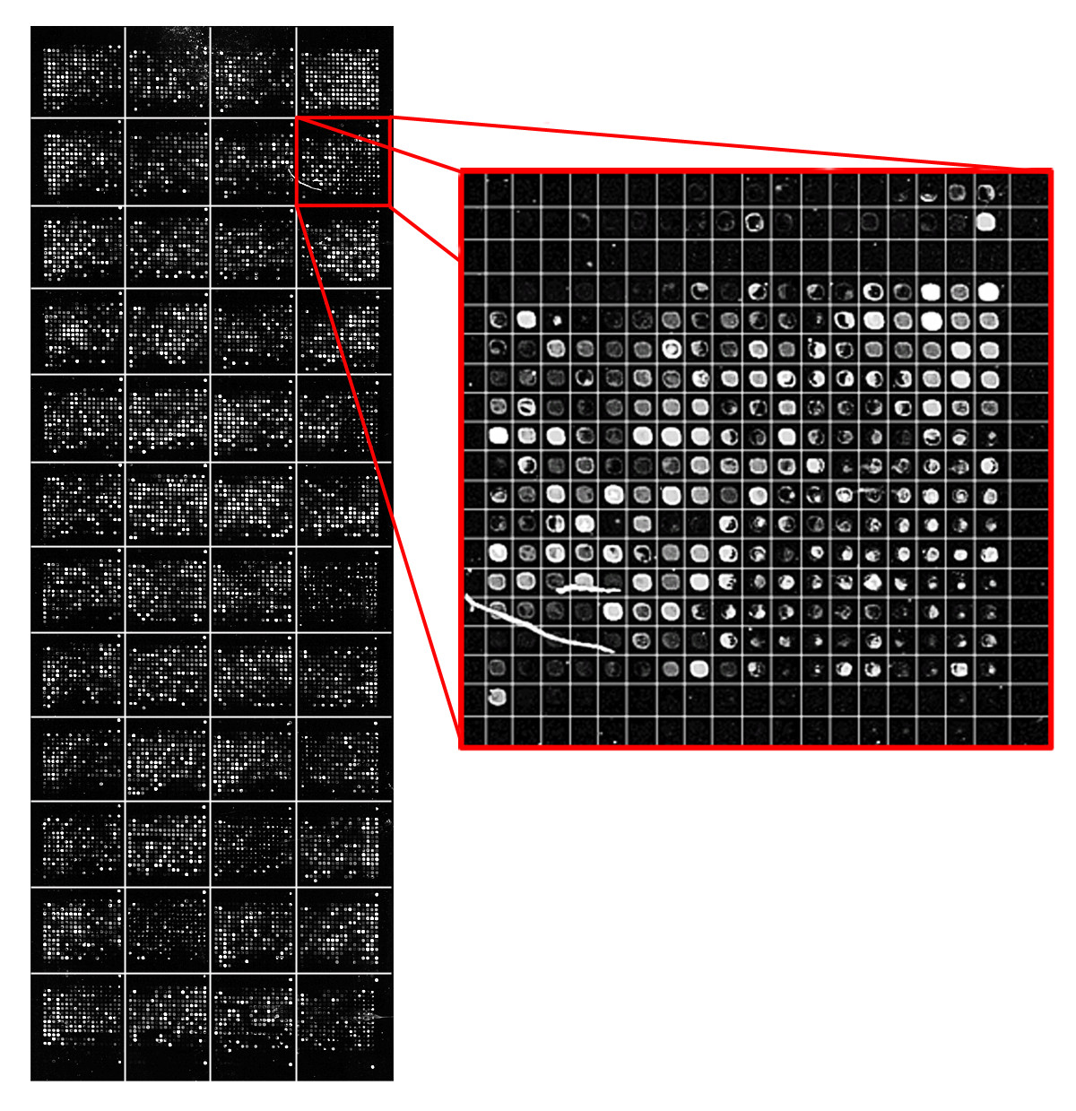 https://static-content.springer.com/image/art%3A10.1186%2F1471-2105-12-113/MediaObjects/12859_2010_Article_4507_Fig1_HTML.jpg