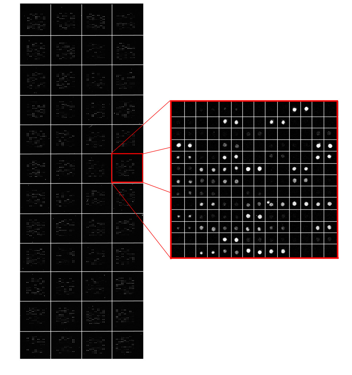 https://static-content.springer.com/image/art%3A10.1186%2F1471-2105-12-113/MediaObjects/12859_2010_Article_4507_Fig2_HTML.jpg