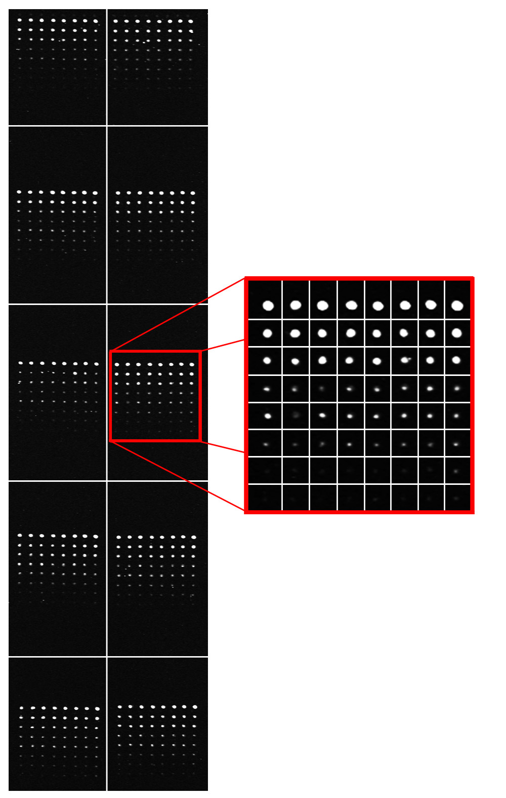 https://static-content.springer.com/image/art%3A10.1186%2F1471-2105-12-113/MediaObjects/12859_2010_Article_4507_Fig3_HTML.jpg
